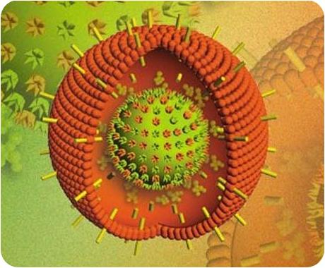 Вирус Эпштейна-Барр, вызывающий инфекционный мононуклеоз